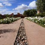 Allée de roses blanches