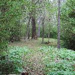Wonder along Weaver Branch Creek