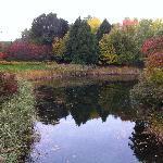 Beautiful Garden on St Helen Island