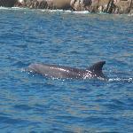 Dolphin at Cabo Pulmo