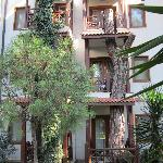 Balcony built around tree
