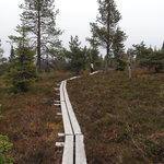 Boardwalks in Riisitunturi National Park