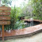 Cenotes on premises