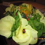 Salad from Garden