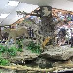 Animal Display Inside