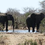elefanti lungo il cammino
