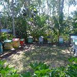 Les ruches de Case Gardenias