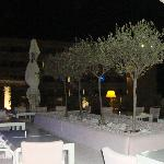 Terrace -olive trees