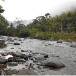 River El Abrazo del Arbol