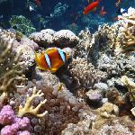 Nemo sur recif de l hotel mais assez loin sur la gauche