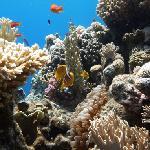 Nemos du house reef