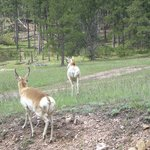 Pure nature in the Custer State Park