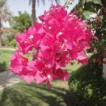 Blumenpracht in Al Ain