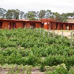 Vineyard accommodation amongst 10 acres of vines