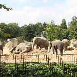 ゾウがいっぱい