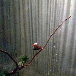 Inn's Pet Finches