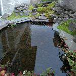 Pond located at the barbeque patio