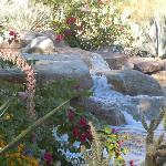 Beautifu gardens