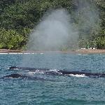Humpback Whales near San Josecito beach