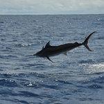 Marlin diving!!!