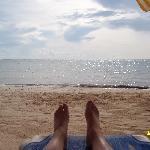 beacheyri