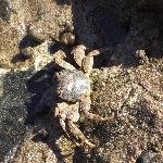 local crab :-)