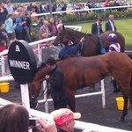 Winners enclosure