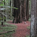 Montgomery Woods State Reserve