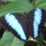 Butterfly area