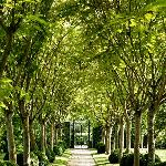 Wonderful tree-lined avenue in the gardens