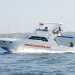 Srikandi, our premium boat, on a dolphin tour.