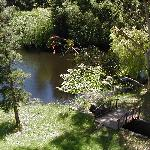 The wildlife pond seen from Black Heron deck