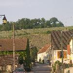les vignes de champagne a baulne en brie