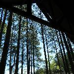 vista del bosque desde la cama