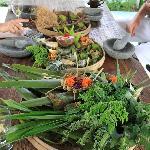 Echantillon des plantes & épices utilisées