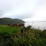 wildlife on Arran - between the road and the sea