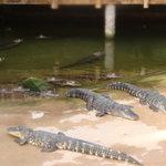 Alligator Bay Photo