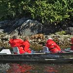 grizzly bear viewing by boat