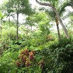 Furama Tropical Garden