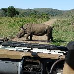 A close encounter in HluHluwe Game Reserve