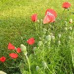 Enjoy the sun and shade gardens