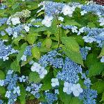 Summer flowers abound