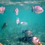 snorkelling just in shallow water
