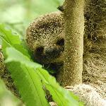 Baby Sloth at Hotel Byblos!