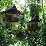 Beautiful Private Jungle Bungalows