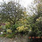 Foxmount's Herb Garden