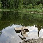 Teich im Wald, Wanderweg unweit Hotel Arte, Spreitenbach