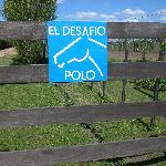 www.eldesafiopolo.com
