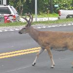 keep your eye out for key deer,they really are here.