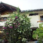 Front of house with bougainvillea.